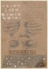 Anatomía de los fosfenos | Collage de Sara Calivi | Compra arte en Flecha.es