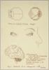 Anatomía de la introspección | Collage de Sara Calivi | Compra arte en Flecha.es