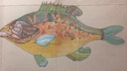 Perca Sol   Dibujo de Lisa   Compra arte en Flecha.es