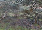 Encina y ramas secas | Fotografía de Angélica Suela de la LLave | Compra arte en Flecha.es