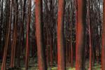 Bosque rojo | Fotografía de Leticia Felgueroso | Compra arte en Flecha.es