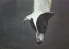 Perdido   Pintura de Gonzho   Compra arte en Flecha.es