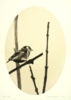 Jilguero entre ramas | Dibujo de Enrique González | Compra arte en Flecha.es