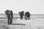 SIMPLY ELEPHANTS   Fotografía de Yabar   Compra arte en Flecha.es