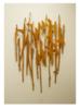 Teoría de cuerdas 2 | Escultura de Krum Stanoev | Compra arte en Flecha.es