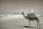 Pyramids, Giza, Cairpo, Egypt   Fotografía de Andy Sotiriou   Compra arte en Flecha.es