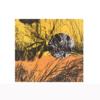 El bosque translúcido  28.3 | Obra gráfica de Josep Pérez González | Compra arte en Flecha.es