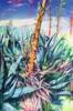 Piteras   Pintura de María Durá   Compra arte en Flecha.es