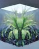 Lucernario | Pintura de Carmen Montero | Compra arte en Flecha.es