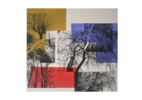 El bosque translúcido 2 V/E III | Obra gráfica de Josep Pérez González | Compra arte en Flecha.es