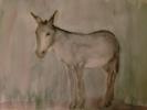 Burro 4 | Dibujo de OliverPlehn-Artist | Compra arte en Flecha.es
