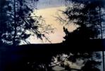 Bosque #1014 | Pintura de Aya Eliav | Compra arte en Flecha.es
